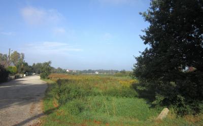 Stadt stellt Grünfläche zur Beweidung zur Verfügung