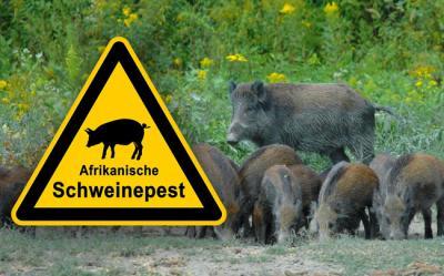 Foto zu Meldung: Kreis warnt vor Tierseuchen – Geflügel- und Schweinepest bedrohen die Region – Jäger und Bürger sollen helfen