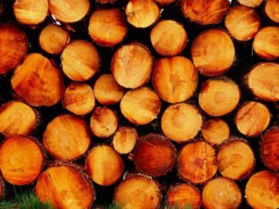Foto zu Meldung: Bestellung von Brennholz