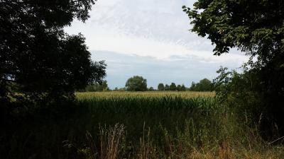Foto zu Meldung: Agrarflächen - Preisspekulation