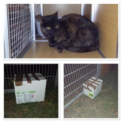 Vorschaubild zur Meldung: Ausgesetzte Katze vor dem Tor der Nothilfe!
