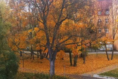 Vorschaubild zur Meldung: Hinweise zur Abholung und Entsorgung des Herbstlaubes