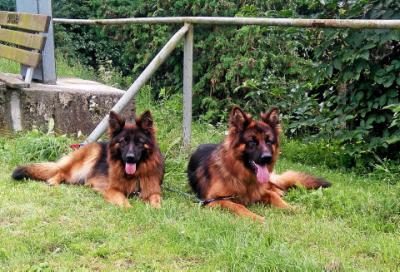 Foto zur Meldung: Hundehalterin will Klage gegen Veterinäramt einreichen