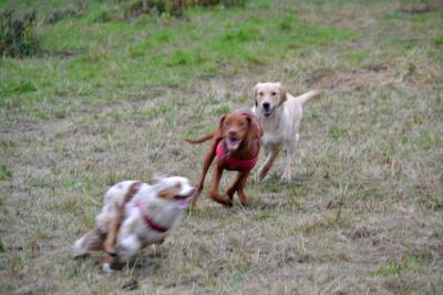 Debbie, Hugo und Emily haben Spaß und jagen sich spielerisch über den Platz – Neuer Hundeauslaufplatz erfreut sich großer Beliebtheit