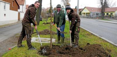 Foto zur Meldung: Neue Bäume an Kirchheilingens Vorstadt