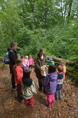 Vorschaubild zur Meldung: Commerzbank-Umweltpraktikum im Nationalpark Hainich
