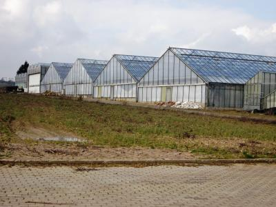 """In den nächsten Jahren soll das ehemalige Gärtnereigelände """"Am Berghof"""" für eine Wohnbebauung erschlossen werden. Dafür wurden die Gewächshäuser abgerissen."""