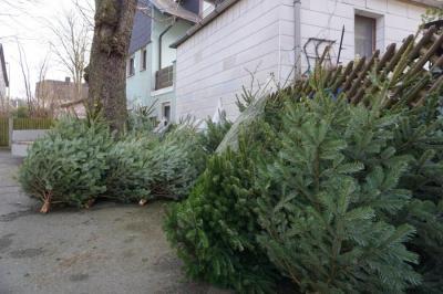 Vorschaubild zur Meldung: Weihnachtsbäume