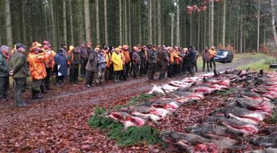 Vorschaubild zur Meldung: Großartiger Jagderfolg im Neuendorfer Wald