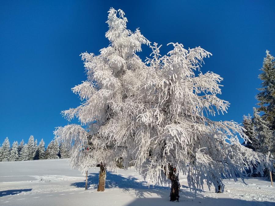 Weihnachten 2019 Schnee.Skiverband Schwarzwald E V Frohe Weihnachten Und Ein Glückliches