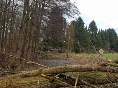 Foto zur Meldung: Sturmtief Friederike