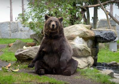 Foto zur Meldung: Bärengeburtstag und Nachwuchs im Schiebocker Zoo