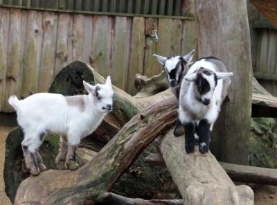Foto zur Meldung: Osterfest im Tierpark Bischofswerda