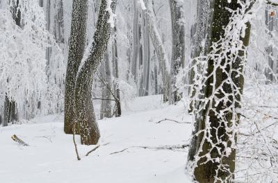 Nationalpark Hainich - bildschön im Winter FOTO: Rüdiger Biehl