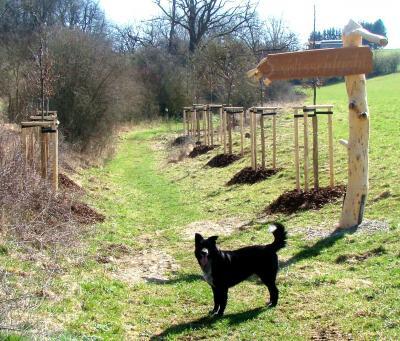 Vorschaubild zur Meldung: Bäume am Mihlaer Wanderweg gepflanzt