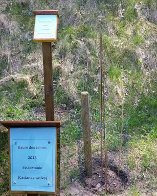 Foto zu Meldung: Baum des Jahres