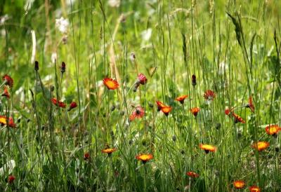 Vorschaubild zur Meldung: Hier entsteht eine Wildblumenwiese!