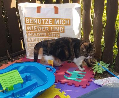 Vorschaubild zur Meldung: Katze entlaufen Gartenanlage Altheide!