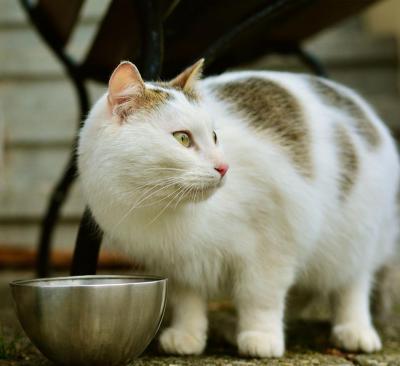 Seminar 1 x 1 der Katzenernährung