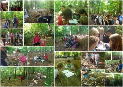 Vorschaubild zur Meldung: Neues aus den 4. Klassen - Jugendwaldspiele