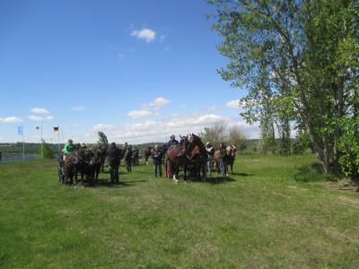 Vorschaubild zur Meldung: Mit Pferdestärken auf der Halbinsel Stöbnitz