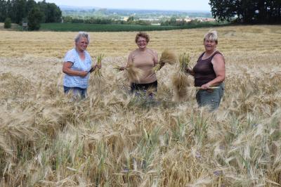 Vorschaubild zur Meldung: Lindenauer Landfrauen sammeln Getreide