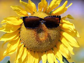 Foto zur Meldung: Start in die Sommerferien