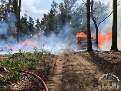 Foto zur Meldung: Waldbrand im Granseer Stadtwald