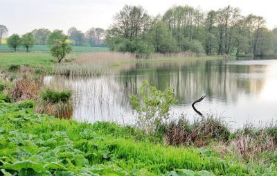 Foto zu Meldung: Der Schmalensee – als Badegewässer weiter unbedenklich