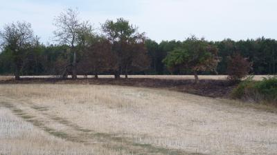 Vorschaubild zur Meldung: Brand bei Klosterrode