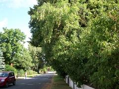 Vorschaubild zur Meldung: Zurückschneiden von Hecken, Sträuchern und Bäumen an Straßen und Gehwegen