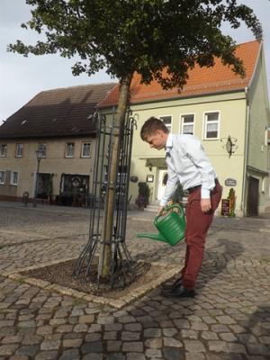 Der Rotdorn auf dem Marktplatz bekommt heute eine extra Portion Wasser
