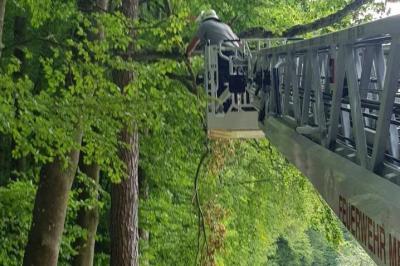 Einsatz Nr. 134  - Ast droht auf Straße zu fallen, Neckargemünder Weg