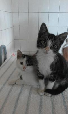 Kätzchen