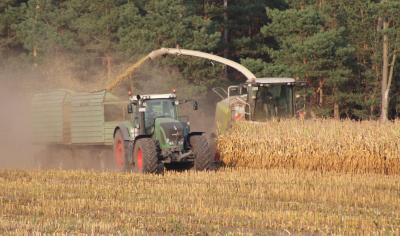 Silomaisernte läuft auf Hochtouren, so zeitig wie nie. Die Maispflanzen sind auf den Stengeln vertrocknet, es ist kein Zuwachs mehr zu erwarten. Hier in der Flur Tettau.
