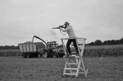 Der Schütze muss bei der Erntejagd von einer erhöhten Jagdeinrichtung aus schießen, wenn ein Kugelfang nicht gewährleistet ist. Foto: SVLFG