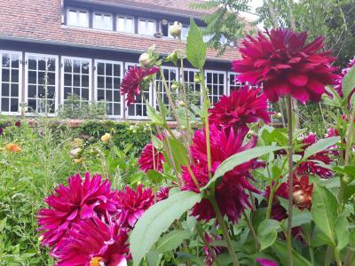 """""""Dahlien satt"""" sind derzeit in der Gärtnerei des Parks zu finden und laden zur Selbstpflücke ein."""
