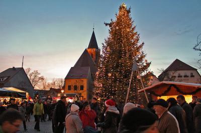 Foto zur Meldung: Calau sucht einen Weihnachtsbaum