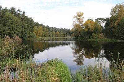 """Foto zu Meldung: Entwurf des Managementplans für das Fauna-Flora-Habitat (FFH)-Gebiet """"Mühlenteich"""""""