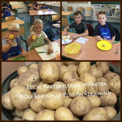 Vorschaubild zur Meldung: Reiche Kartoffelernte im Garten der Realschule plus Am Reichswald