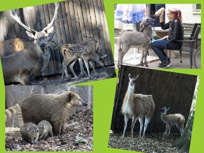 Vorschaubild zur Meldung: Geburten im Perleberger Tierpark