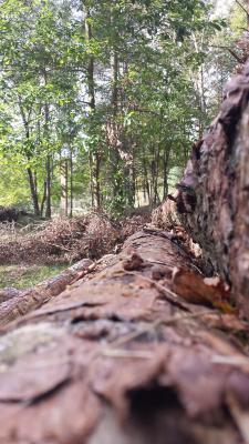 Foto zur Meldung: BRANDENBURG: Beratungsdienste zur nachhaltigen Bewirtschaftung von Waldflächen