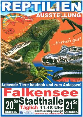111 verschiedene Arten sind in Terrarien auf der Ausstellung in der Stadthalle zu bestaunen.