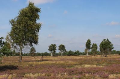 Vorschaubild zur Meldung: Abbrand von Heideflächen