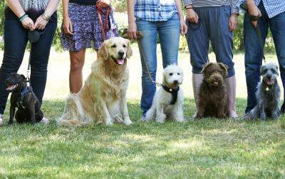 Vorschaubild zur Meldung: Mehr Fiffis, mehr Steuern: Zwischenbilanz der Hundebestandsaufnahme