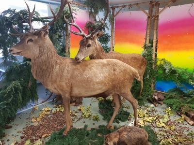 Foto zur Meldung: Aug' in Aug' mit Rothirsch und Reh: Herbst in der SJG