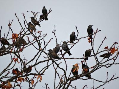 Foto zur Meldung: Vogelzugexkursion zur Hochfläche nördlich von Kaisershagen (UH-Kreis)