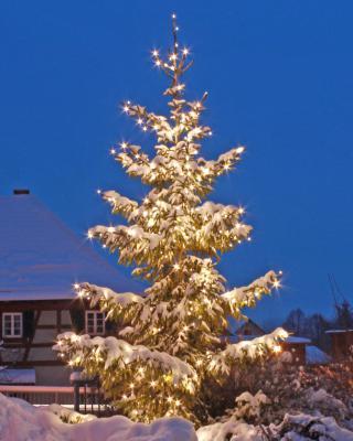 Vorschaubild zur Meldung: Weihnachtsbaum für die Grundschule Grasleben gesucht