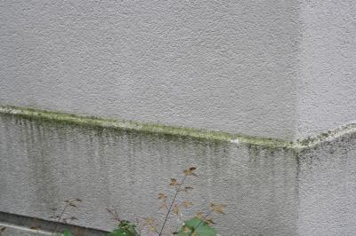 Beispiel Algenbefall an Hausfassaden