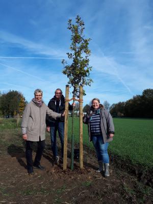 Der Jubiläumsbaum der Gemeinde Holzwickede wurde in Teamarbeit durch Frau Bürgermeisterin Drossel, Herrn Nettlenbusch (Leiter FB IV) und Frau Flormann (Umweltbeauftragte) gepflanzt.